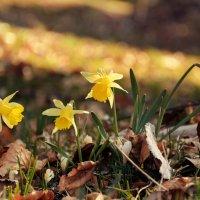 весна в Юрских горах :: Elena Wymann