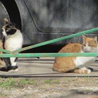 Уличные коты. :: Зинаида