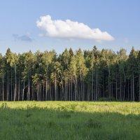 Лес освещённый солнцем. :: Alexandr Gunin