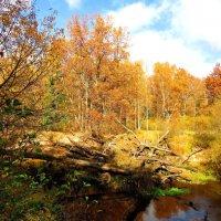Преграда на реке :: Андрей Снегерёв
