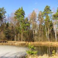 На прудике в лесу :: Андрей Снегерёв