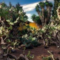 Jardin Botanico Viera & Clavijo 4 :: Arturs Ancans