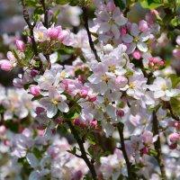 Весна прогулка :: Sergej