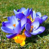 И снова радуют цветы :: Людмила Торварт