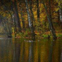 Осенние отражения.......... :: Юрий Цыплятников