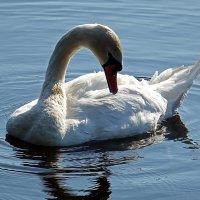 """""""Есть очень красивая птица на свете..."""" :: Ольга И"""