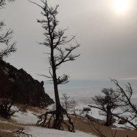 Ходульные деревья в бухте Песчаная :: Галина