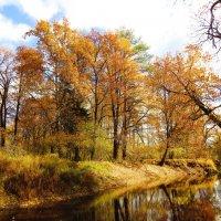 В лесу на реке :: Андрей Снегерёв