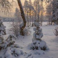 В городском саду... :: Владимир Чикота