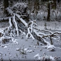 В мартовском лесу. :: Ник Васильев