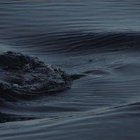 и снова о воде... :: Михаил Жуковский
