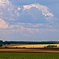 Русское поле. :: Алекс Ант