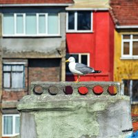 Самоизоляция(Стамбул) :: Valeriy(Валерий) Сергиенко