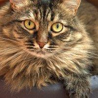 Самая спокойная кошка :: BOB