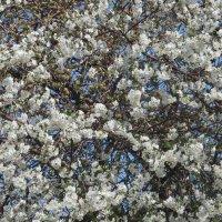 Весна однако! :: Елена Шаламова