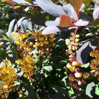 Майское цветение :: veera v