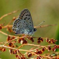 и снова бабочки 187 :: Александр Прокудин