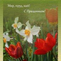 С Праздником! :: Людмила Торварт