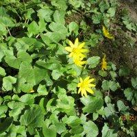 Май,первые цветы. :: Зинаида