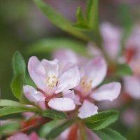 Нечто розовым цветет :: Владилен Панченко
