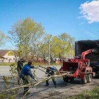 Нещадная утилизация деревьев!..) :: Надежда