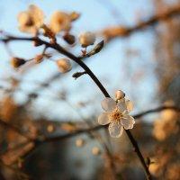 Весна :: Яна Горбунова