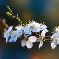 весна :: Александр Евдокимчик