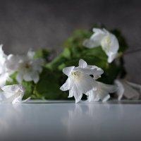Прошлогодняя весна :: Olenka