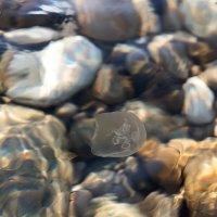 Jellyfish :: Sergey Sergaj