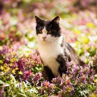 Кот в цветах :: Роман Алексеев