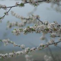 Красоты весны :: Aleksandr Ivanov67 Иванов