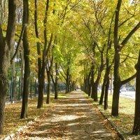 Аллея осенью :: Валерий Тарасов