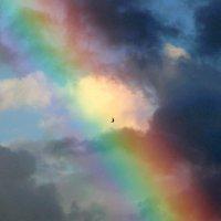 Rainbow und Bird :: igg