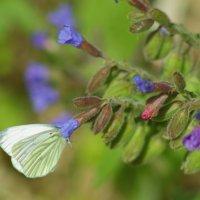 Живой цветок :: Владилен Панченко