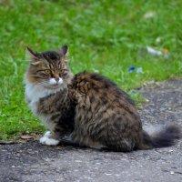 Кот... :: Наташа *****