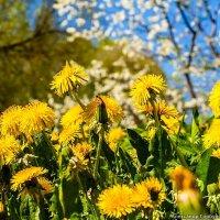 Весна в разгаре :: Александр Горбунов