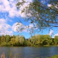 На озере :: владимир тимошенко