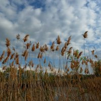 Ветер мая рвет в клочья облака и тростник качает!... :: Лидия Бараблина