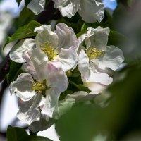 весна :: Михаил