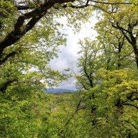 В весеннем лесу :: valeriy khlopunov