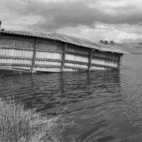 Рыбный пруд :: Валерий Михмель