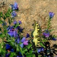 опять про бабочек....2 :: Александр Прокудин