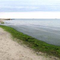 Зеленое море на карантине :: Александр Скамо