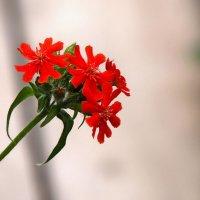 Цветок :: Роман Трофимов
