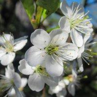 Дыхание весны :: Ирина Майорова