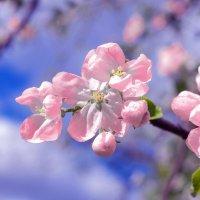 bloom :: Nara Nakhshkarian