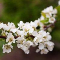 Весна! :: Валерий A.