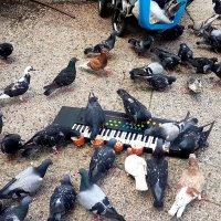 Музыкальная кормушка или бизнес по Тель – Авивски :: сашка ярмарков