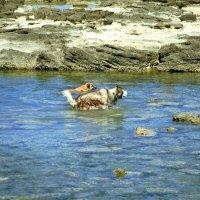 Морские охотники. утро. Средиземное море :: сашка ярмарков