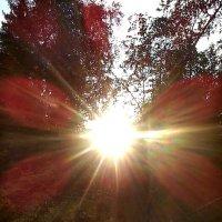 Солнечная ромашка :: Aleck Horn Antony